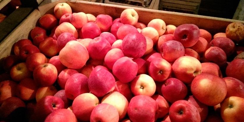 Беларусь поставила в РФ в 5 раз больше яблок, чем вырастила
